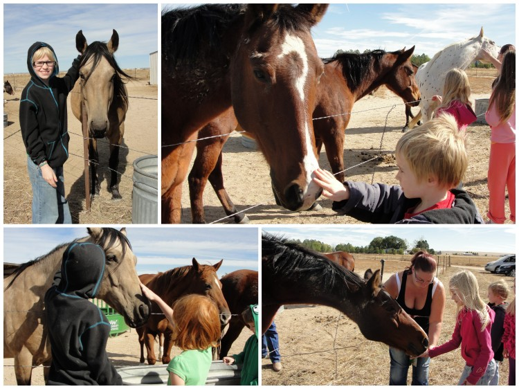 Clockwise from top left: Durin with Jo-Jo, Dain & Kana, Lydia feeding Kana, Durin & Audrey with Jo-Jo*